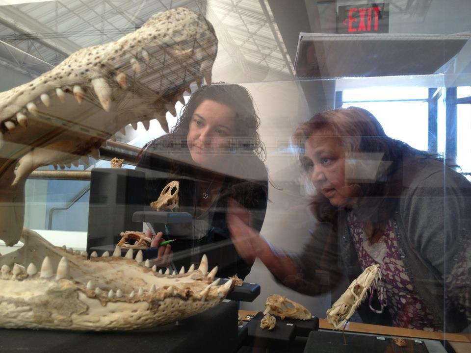 Fifth grade teachers explore a skulls exhibit to compare and contrast the structure and function of systems and the stability and change of adaptations across the animal kingdom through time.