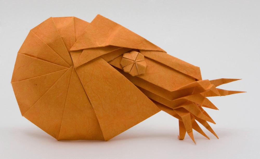 origami_amonite.jpg
