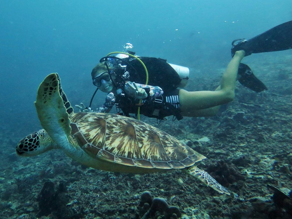 swimmingturtlegiliislands