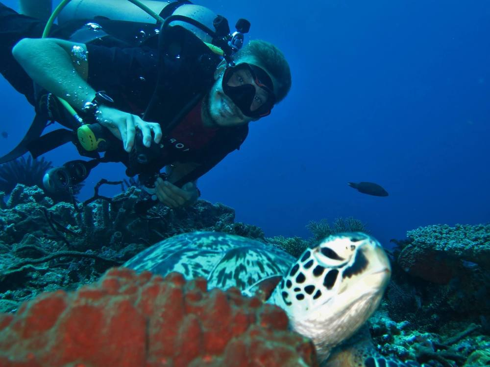 posingturtlegiliislandsdiving