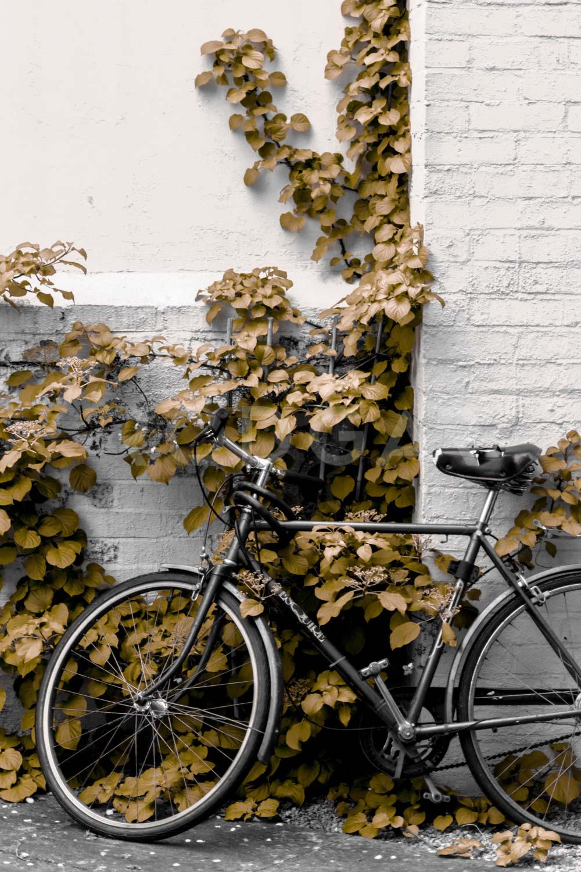 Web_Ciudades_Oxford_017.jpg