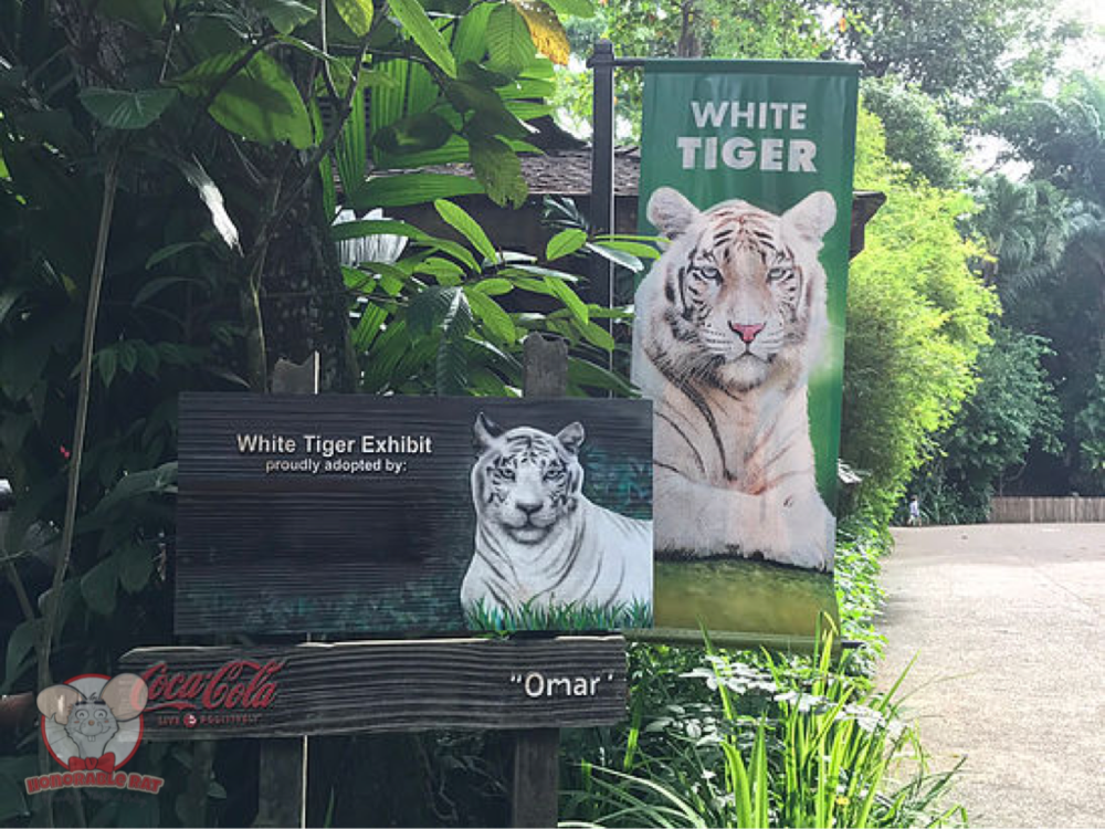 White tiger exhibit