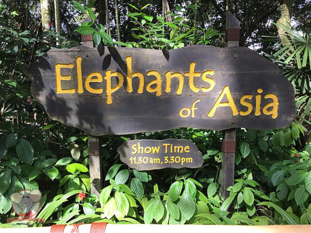 Elephants of Asia exhibit