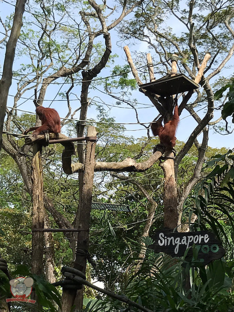 Free-Ranging Orang Utan exhibit