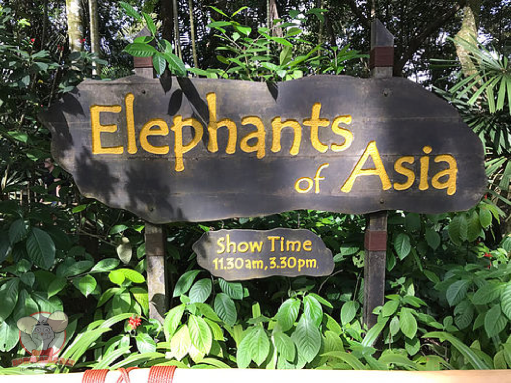 Elephants of Asia: An amazing show that will definitely teach you a thing or two about these magnificent animals