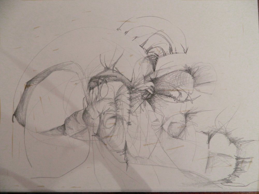 Original Sketch, Darcy Johnson, graphite on paper