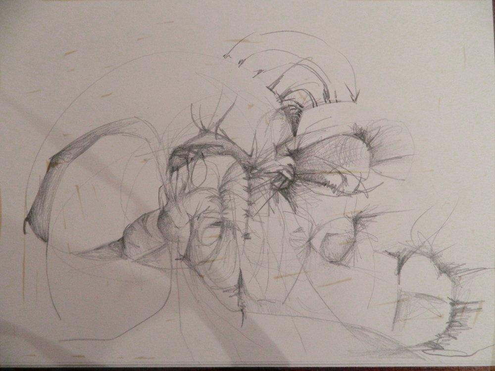 Original Sketch, Darcy Johnson, graphite on paper