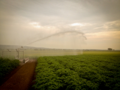 Irrigation of our charlotte potatoes 2014