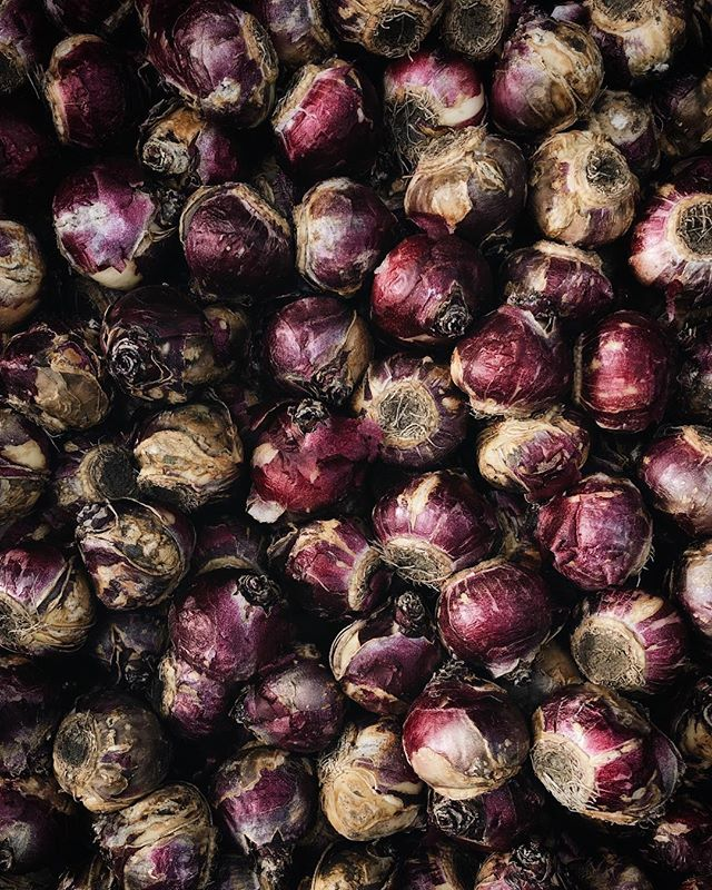 Planting hyacinths with @fiveforkfarms 👯♀️