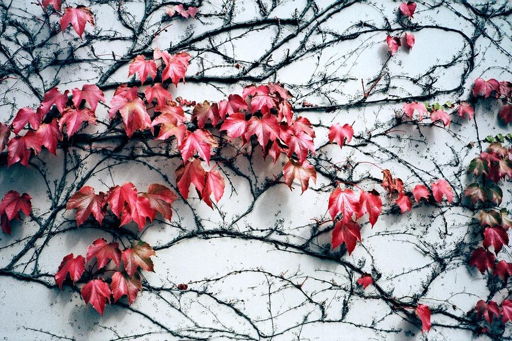 paris_wall_flowers_2007.jpg