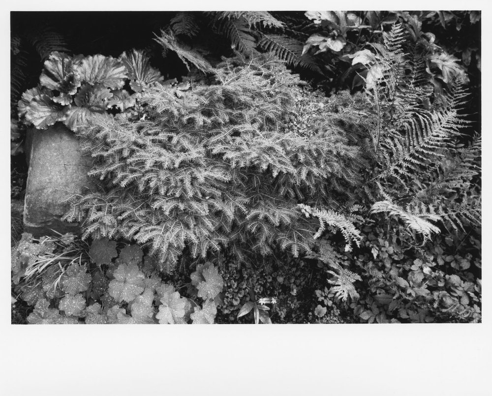 Untitled (3).jpg