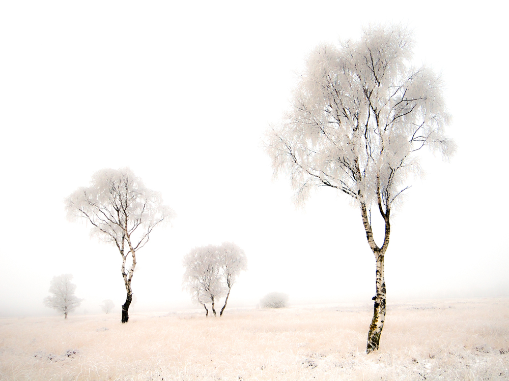 Strensall Common Trees.jpg