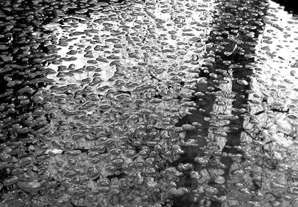 Web Pond Ice.jpg