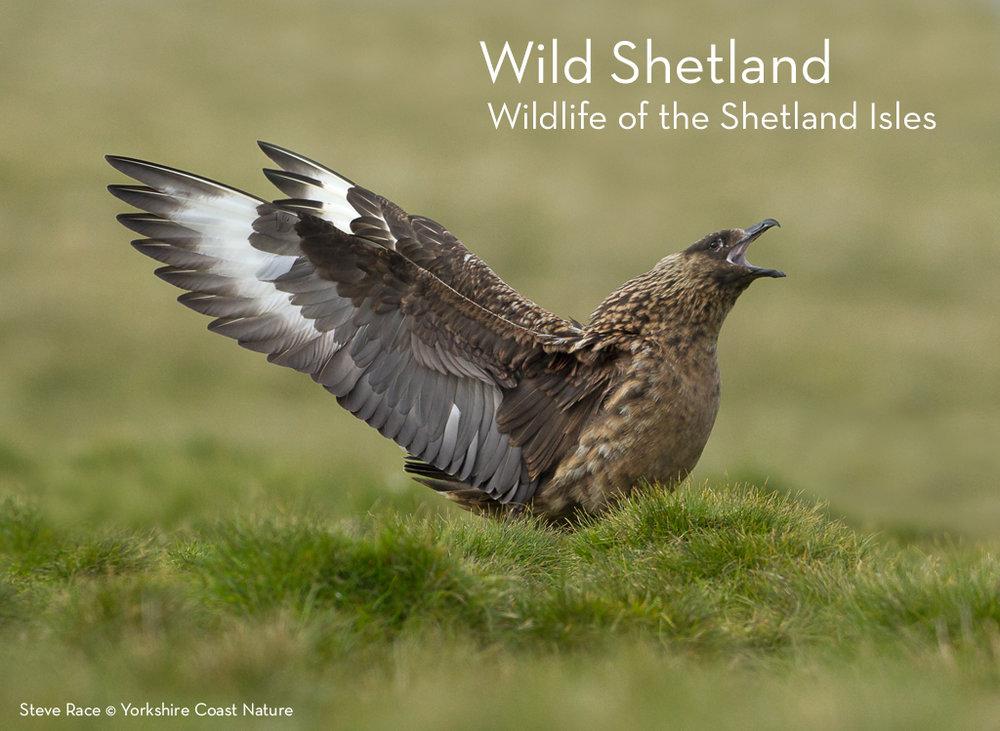 wild_shetland.jpg
