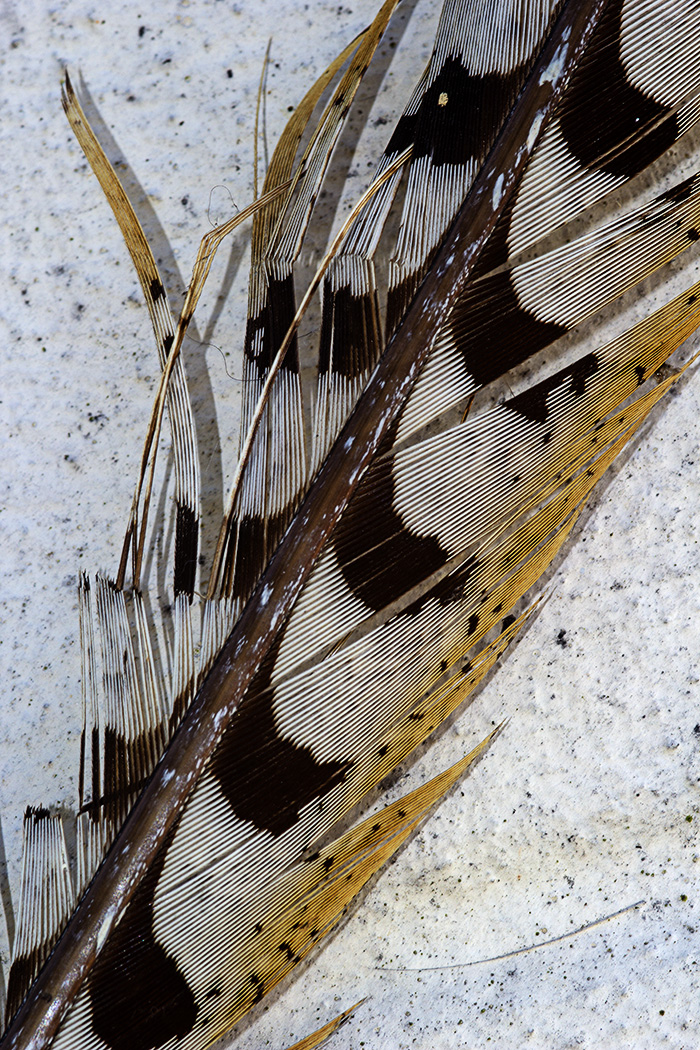 2_Feather_Glynnis_Frith.jpg
