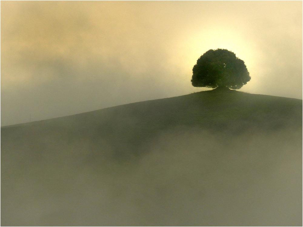 0507_tree_champion.jpg
