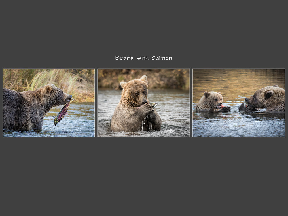 Bears with Salmon_Neville Turton