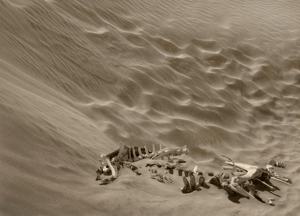 Highly Commended - Bones and Sand by David Gough.jpg