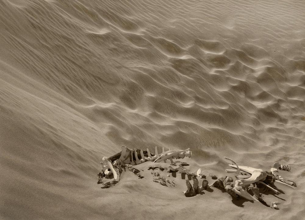 Bones and Sand :: David Gough