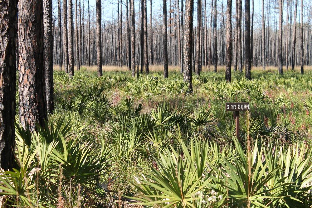 Florida Long Leaf Pine Community