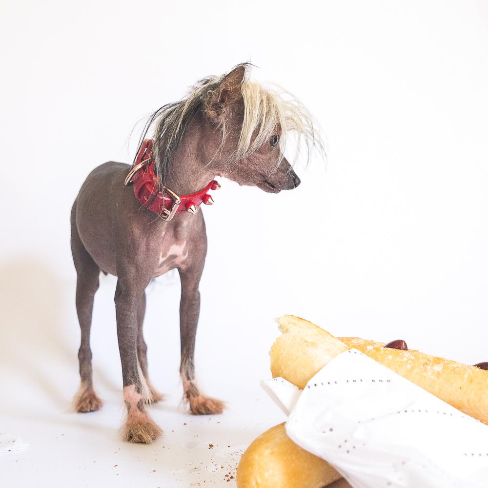 sparkles the dog