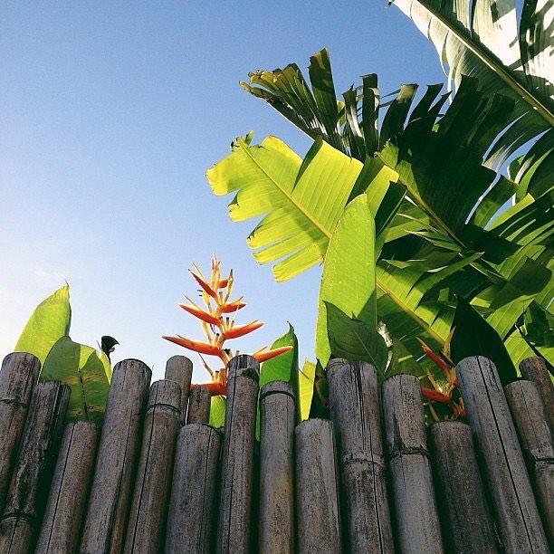 A very good morning in Bali. @lauraflippen #flowers #beautifulblooms #bali #emissaryartists #lauraflippen 🌸🌼🌷💐🌻