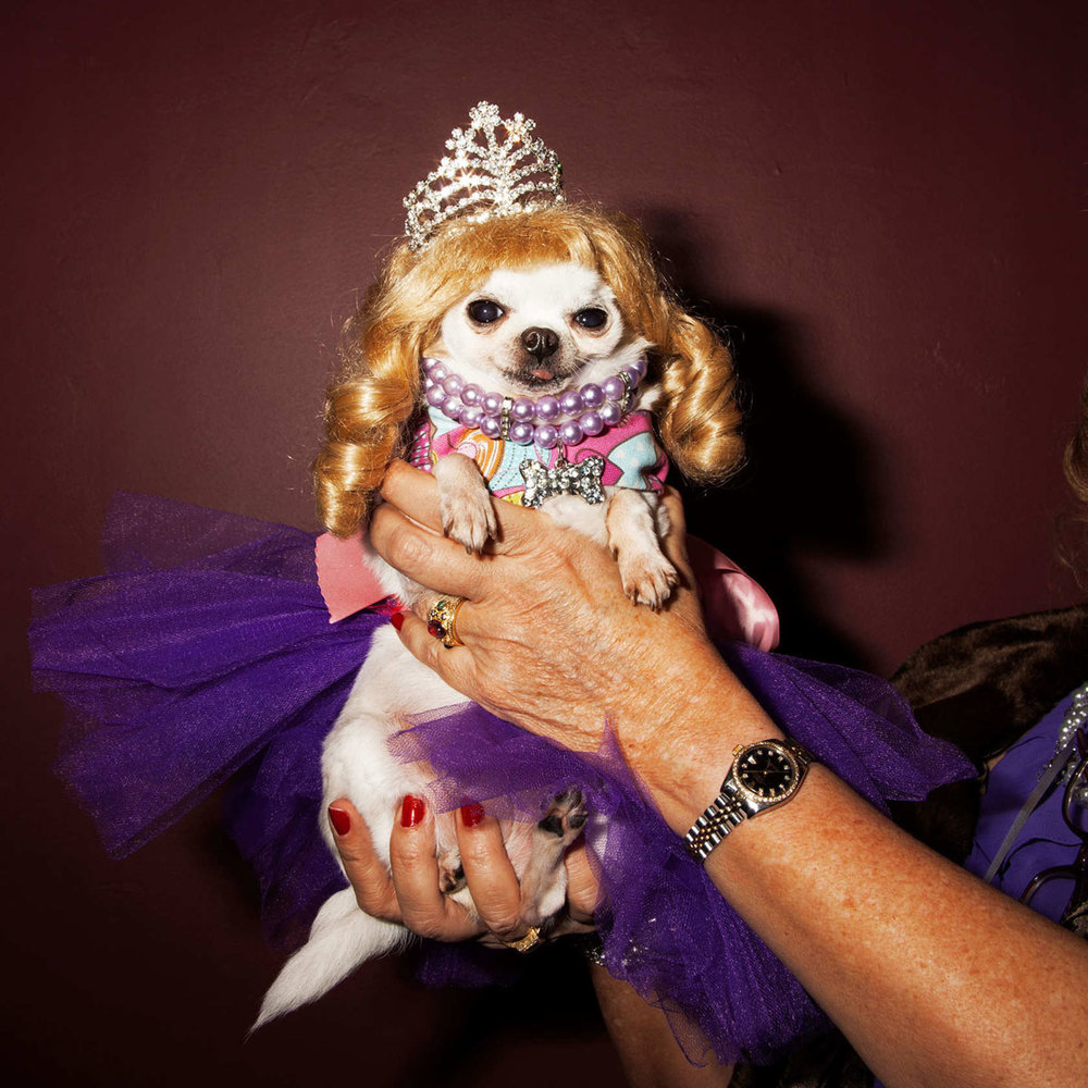 Doggies and Tiaras Pageant for  New York Magazine 's The Cut, February 2013  Photos by  Amy Lombard