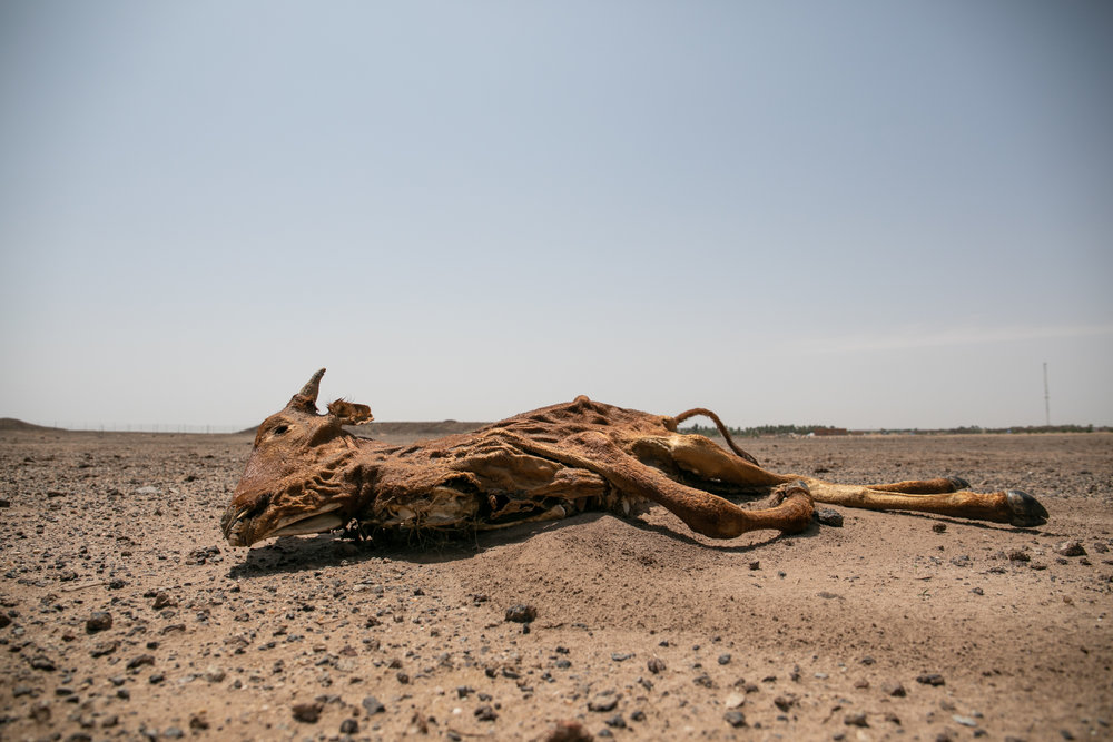 Son las últimas lluvias de la temporada. Pastores nómadas tuaregs recorren a lomos de sus camellos los últimos kilómetros hasta la remota ciudad de Ingall, a 160 kilómetros de Agadez, al norte de Níger. Thousands of herders, from various backgrounds in the Sahel, find themselves on the salty land of In'gall for this unique gathering of the nomad rural world in Niger. Son las últimas lluvias de la temporada.