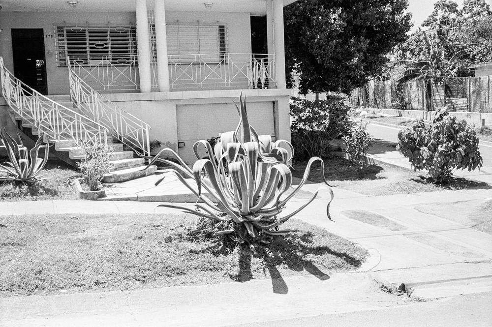 007 plant.jpg