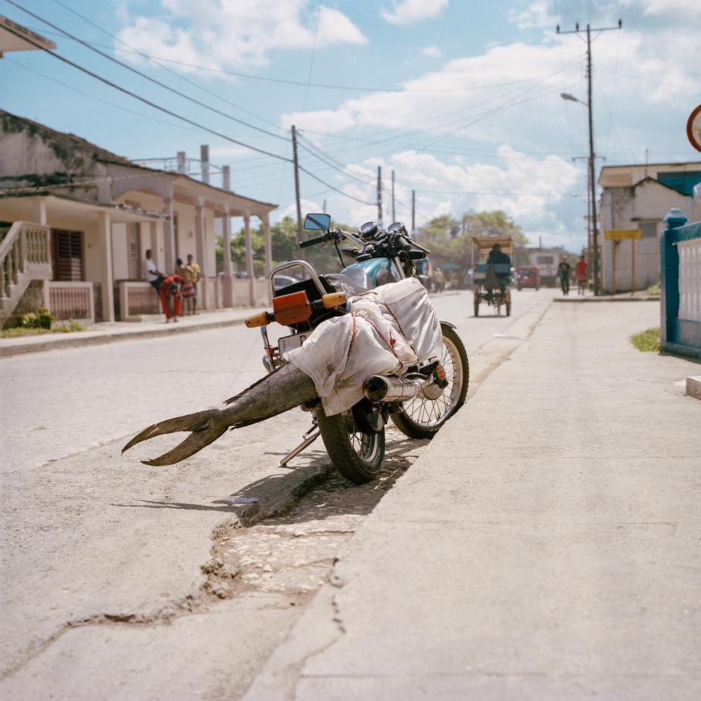 004 motorcycle fish.jpg