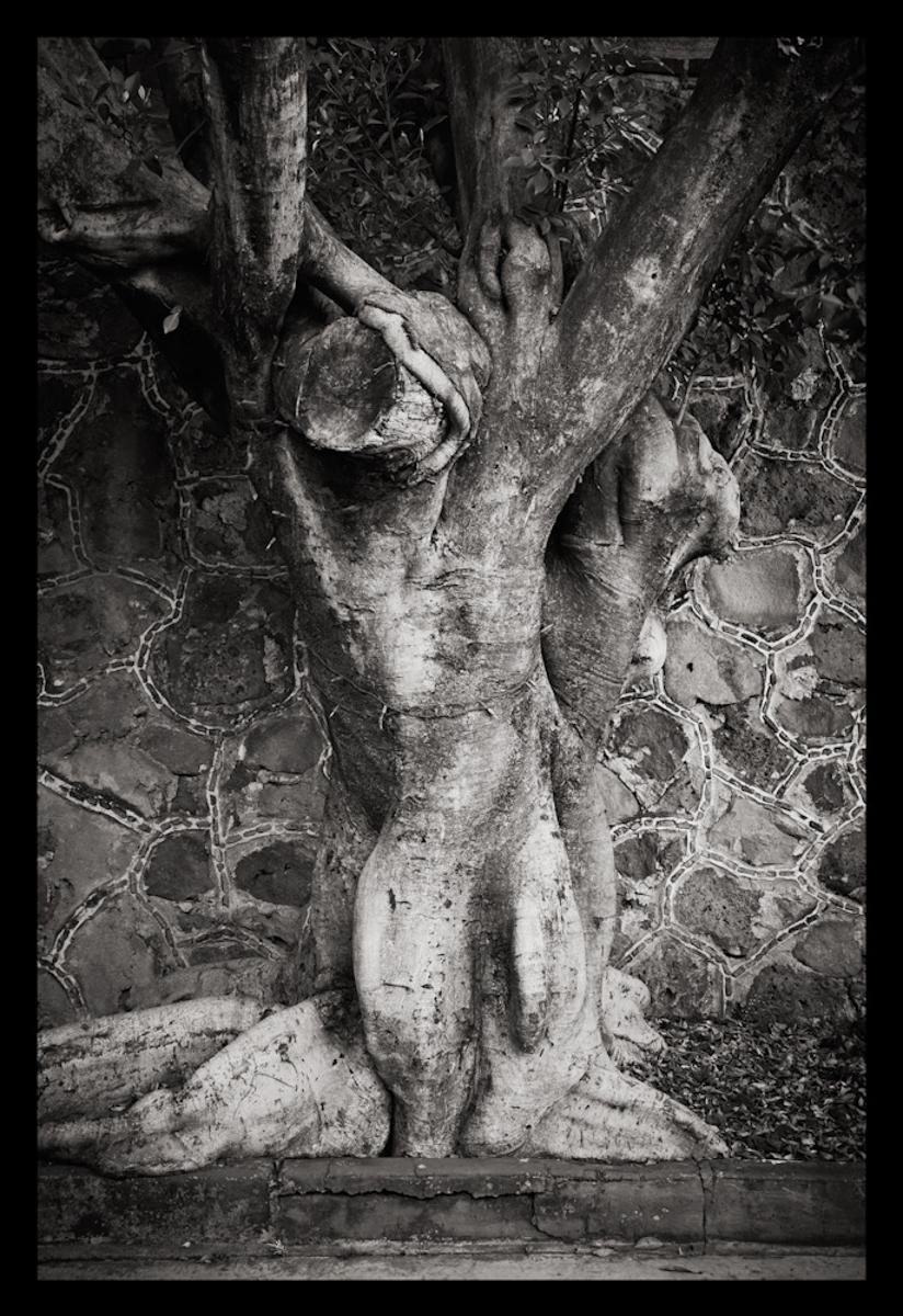 Tree 1, México 2010