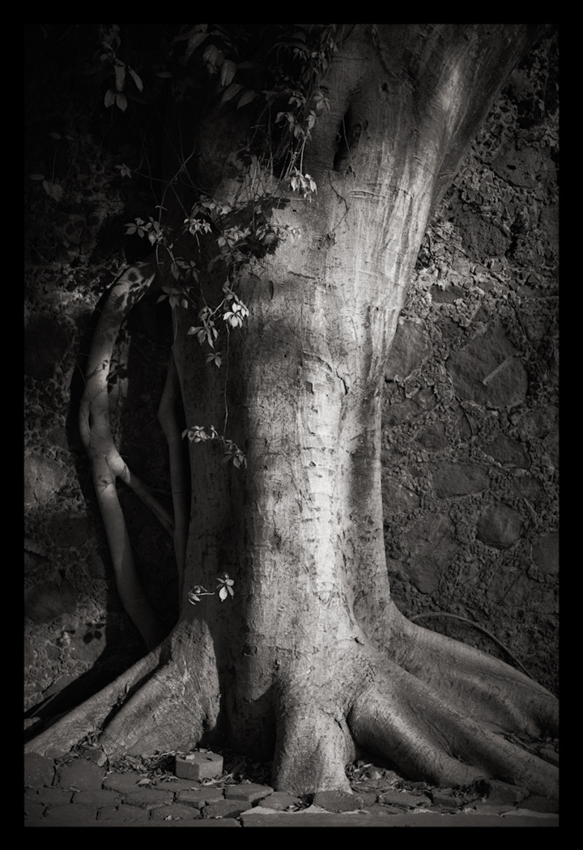 Tree 2, México 2010