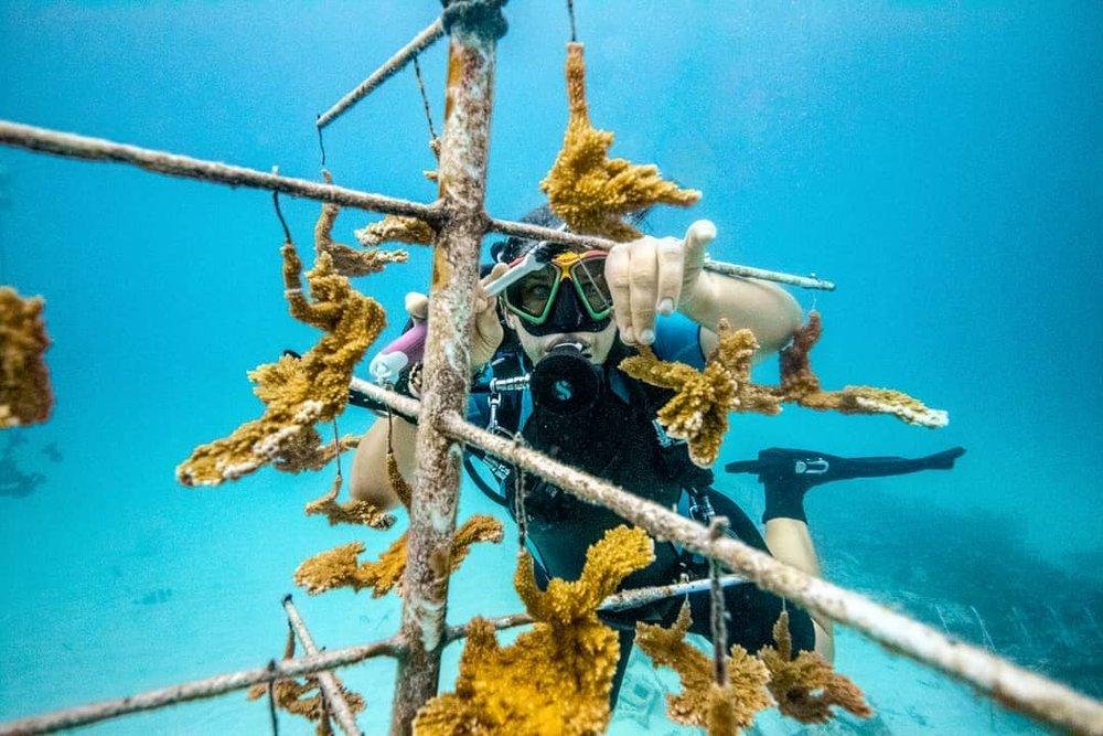 reef diver.jpg