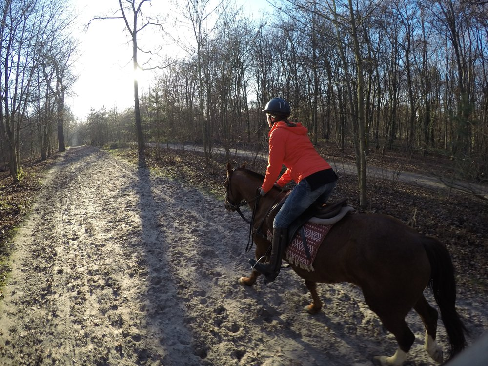Enjoying horses whenever I get the chance — here in Bois de Boulogne Paris with Horse in the City.