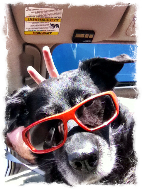 4-cool-dog-sunglasses-ezilstein.JPG