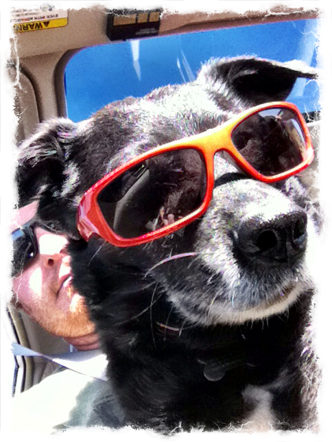 6-cool-dog-sunglasses-ezilstein.JPG