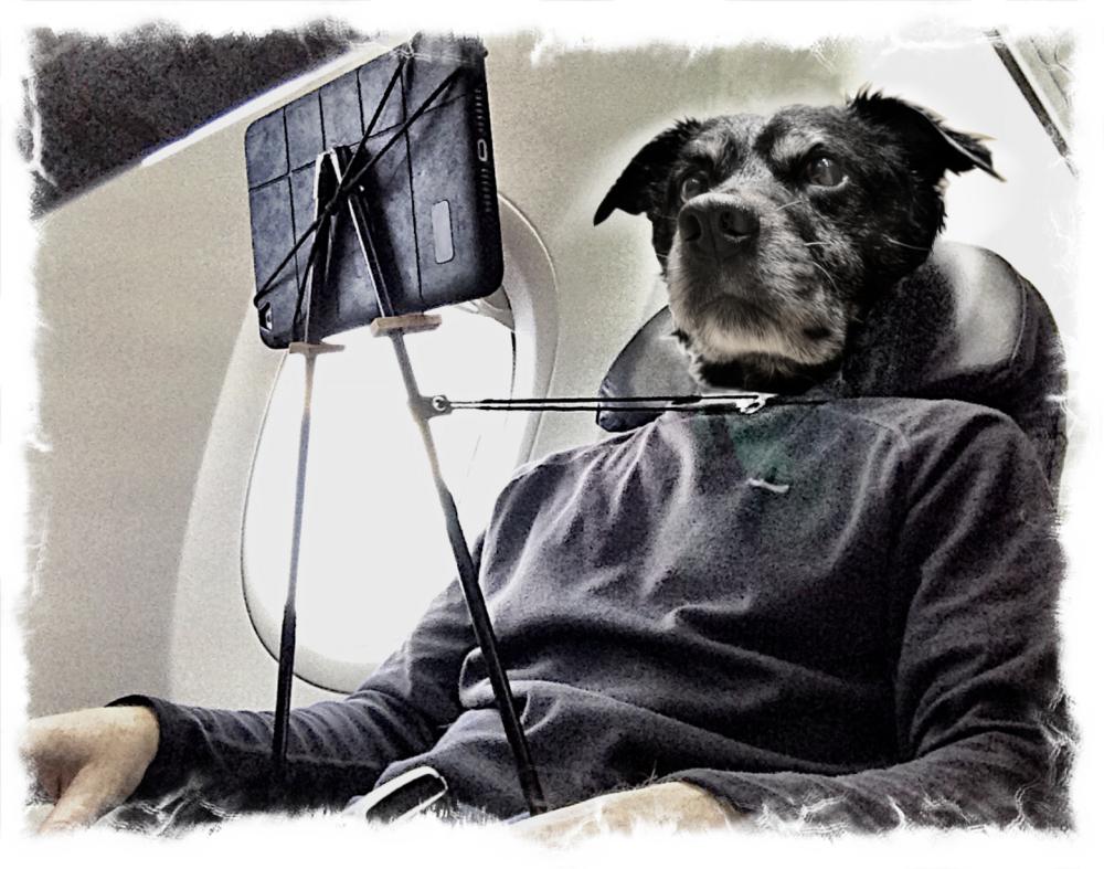 dogface ezilstein.png