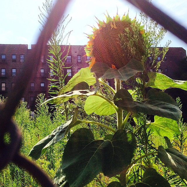 Summer in the Ghetto! Developers: Build affordable housing in my city.