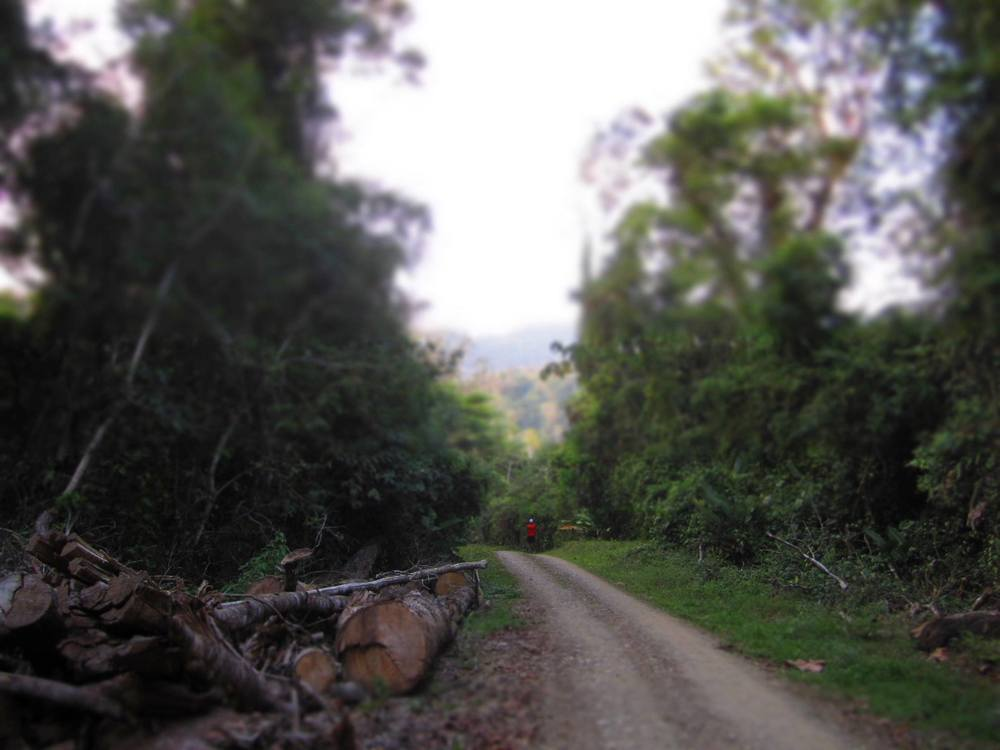 Junglepath.jpg