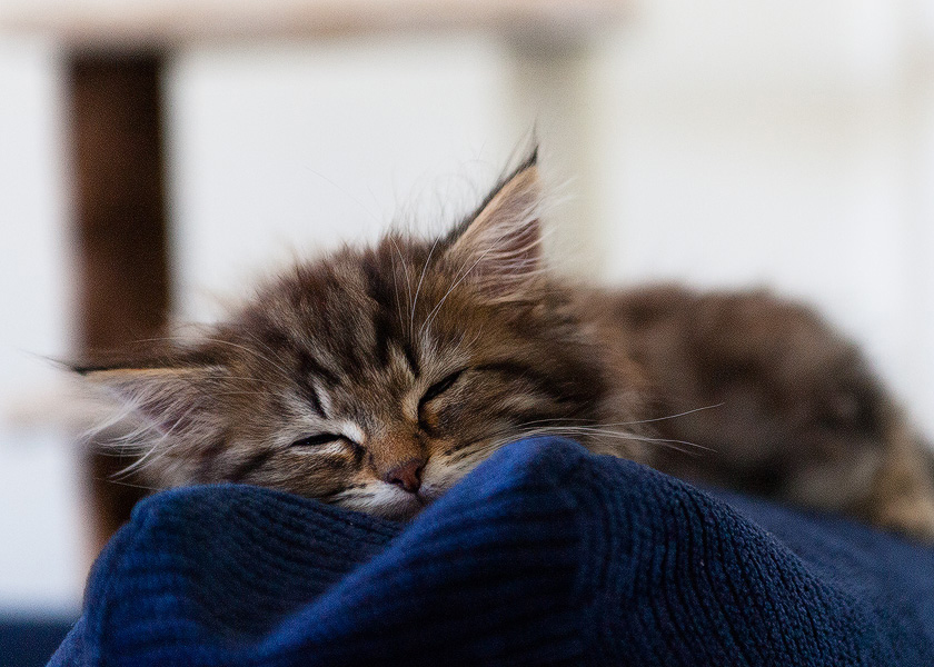sleepy kitty, happy kitty