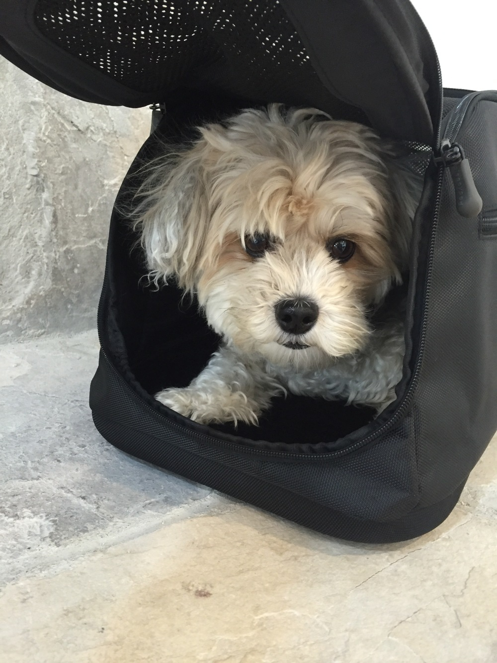 During the day, whether we're home or not, sometimes Mia will climb into her bag for a rest. She absolutely loves her Sleepypod...it's her safe space and her home within our home.