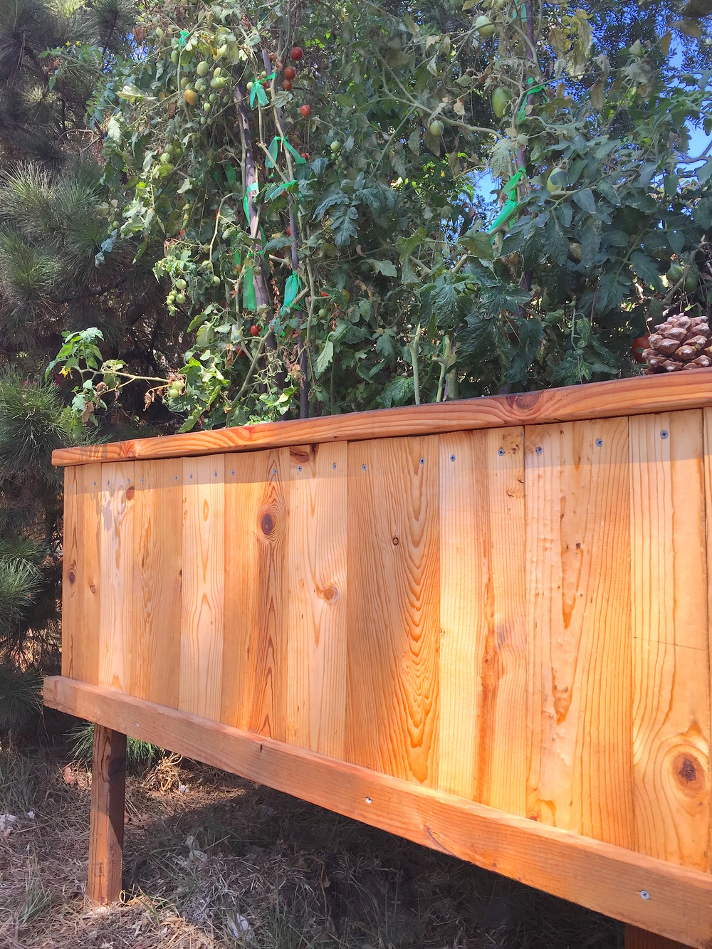 A raised garden bed I made this spring out of untreated salvaged lumber. I applied two coats of neem-cedar oil blend that was diluted with food-grade/cooking oil as an extender.