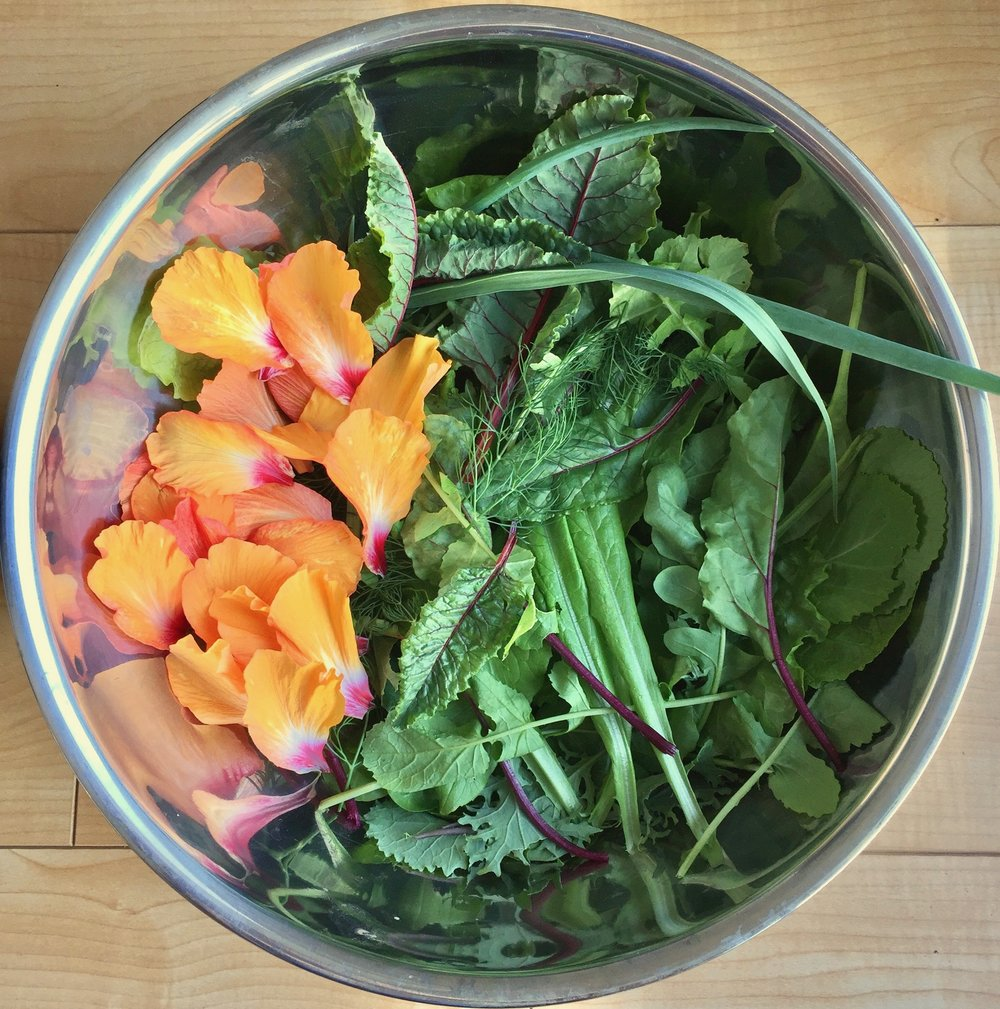 This salad is composed of  Baker Creek's European mesclun mix  grown from seed. It consists of various leaf lettuce, radicchio, arugula, endive, mizuna, kale, and mustard. To the mix I added red stemmed chard, celtuce leaves, fresh dill fronds, green onion, garlic greens, and hibiscus petals.