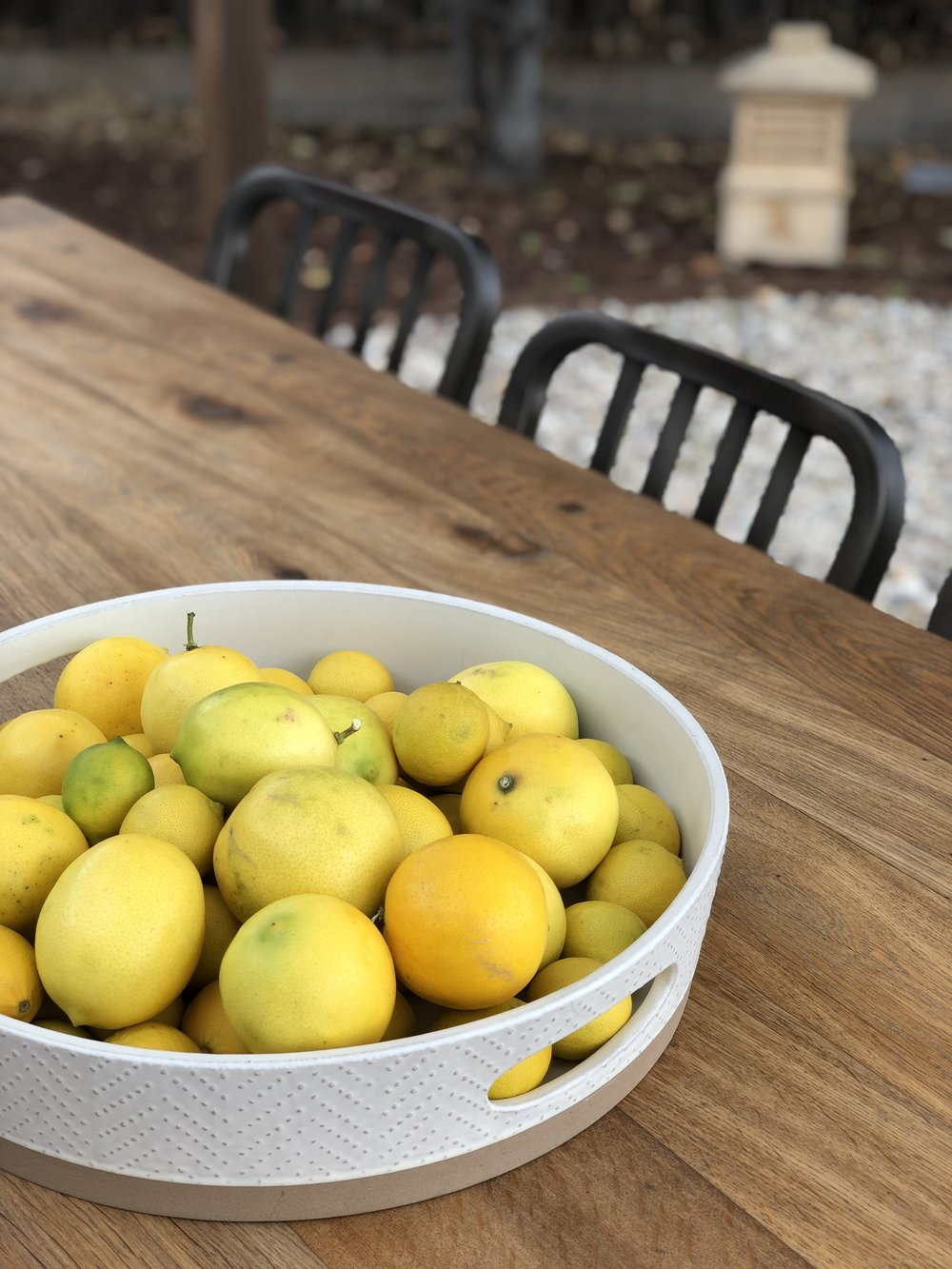 Guests on the day of the brunch brought all kinds of delicious treats including these Meyer lemons- mixed here with limes from our tree.