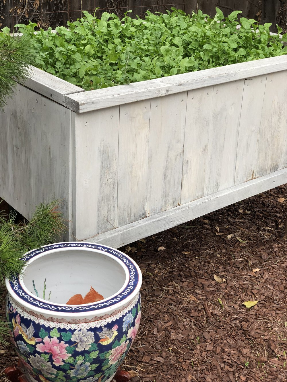 Many raised beds and planters made our garden party a true garden party. This bed is stuffed with arugula that we used to serve an arugula-pistachio-pomegranate salad with yuzu dressing.