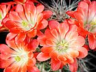 cactus-95.jpg