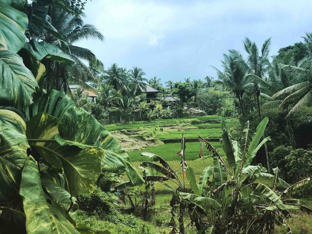 Copy of The View from our Retreat Center! ~ 300 Hour Tantra Yoga Teacher Training in Bali