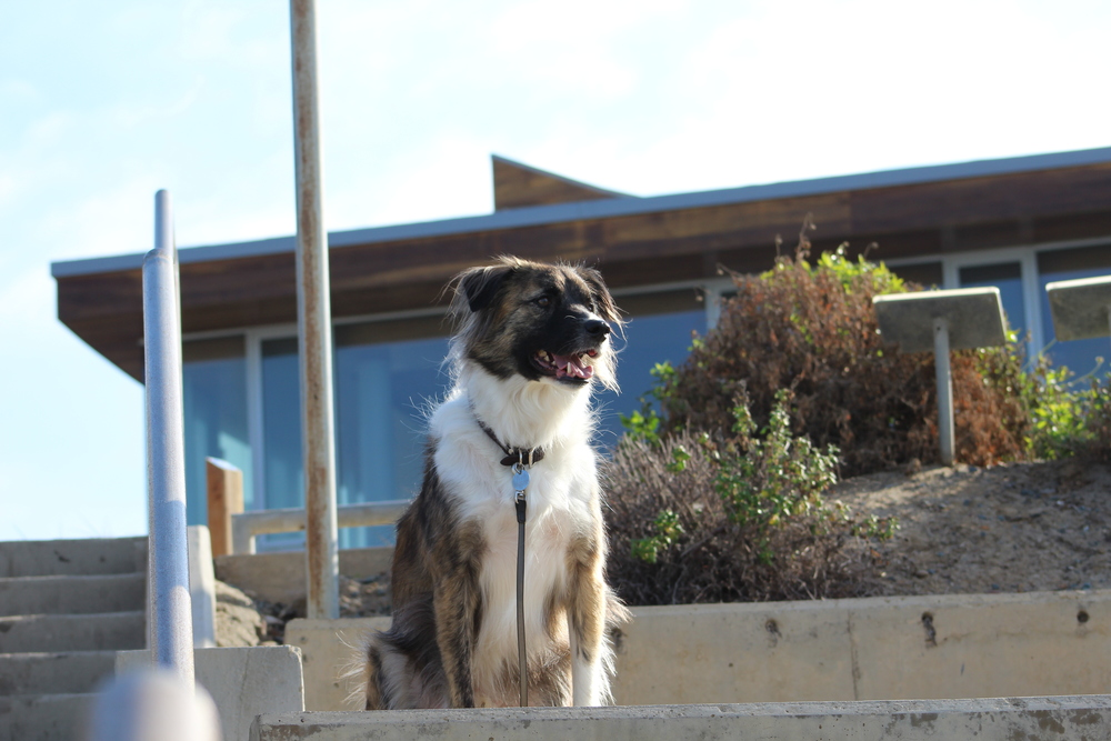 Roscoe Dog  - Agency Therapist
