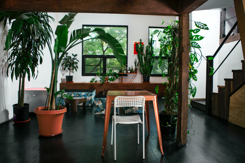 Plant Filled Photo Studio in Brooklyn
