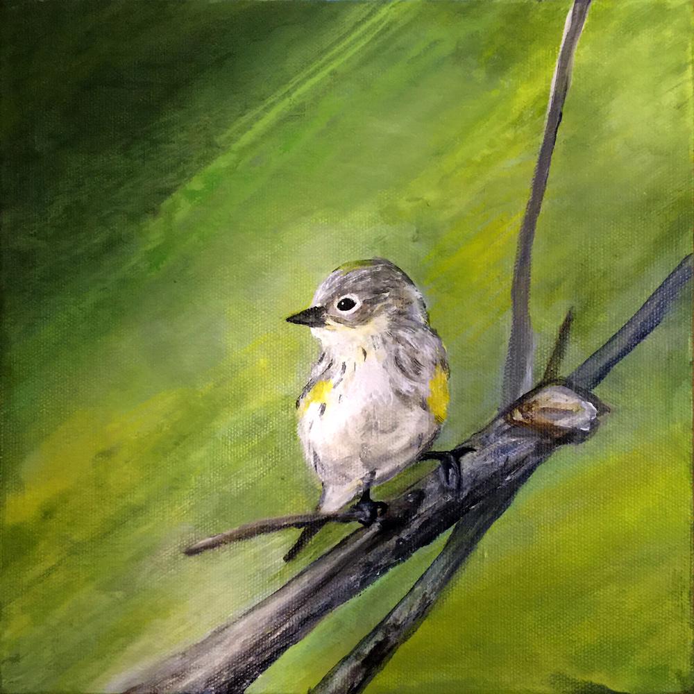 Hi,lovely warblers B.jpg